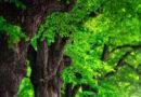 Láser que mide biomasa de los arboles